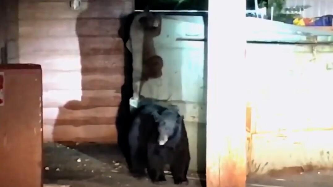 W śmietniku utknął niedźwiadek. Na pomoc przyszło rodzeństwo