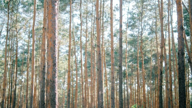 Zagrożenie pożarowe w lasach, <br />kolejne nadleśnictwo zamknięte