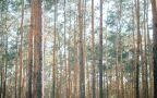 Maciej Lipka z RDLP w Szczecinie o bezpieczeństwie w lasach