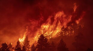 Pożar Bobcat w Kalifornii (PAP/EPA/KYLE GRILLOT)