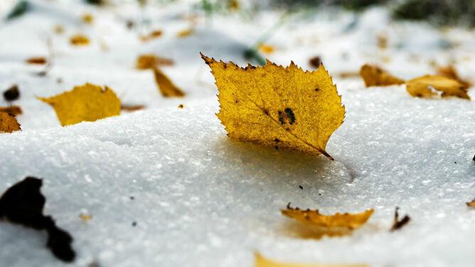 Prognoza pogody na dziś: miejscami spadnie deszcz, deszcz ze śniegiem lub śnieg