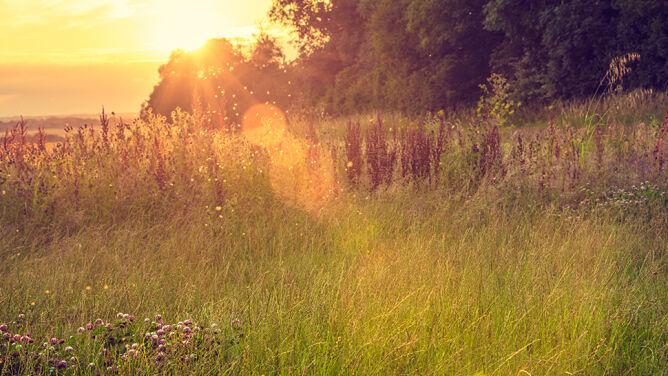 Wakacje z alergią. <br />Sprawdź, gdzie najlepiej spędzić urlop